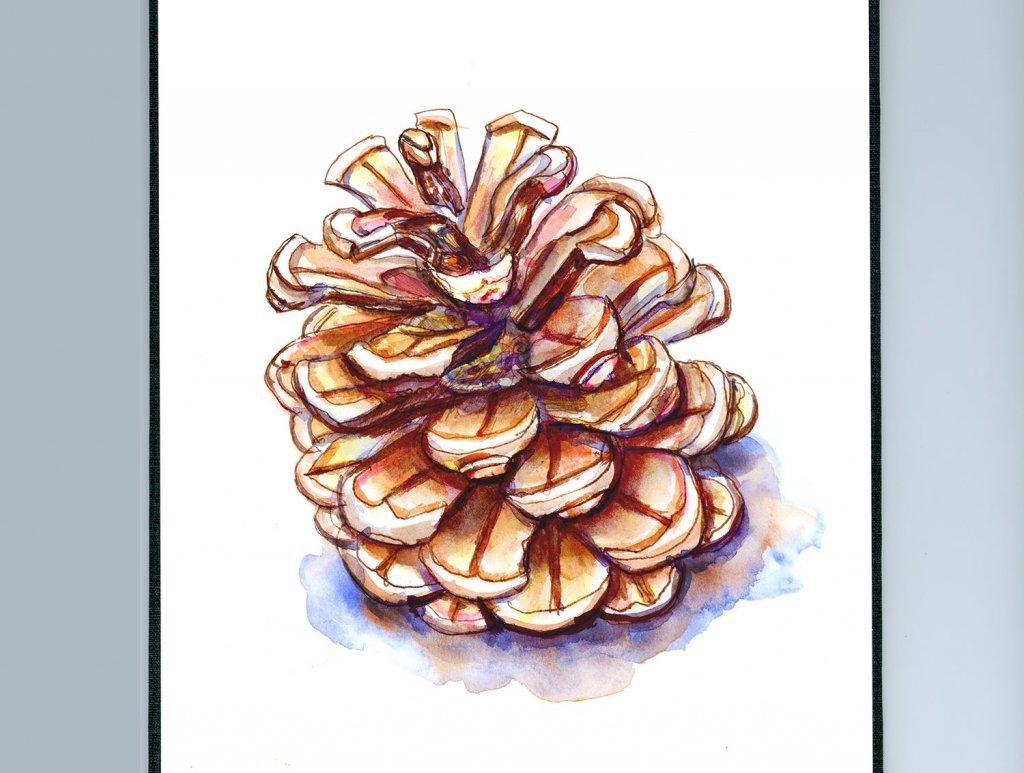 Pinecone Watercolor - Sketchbook Detail