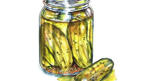 Day 23 - Pickle Jar Of Pickles Watercolor - Doodlewash
