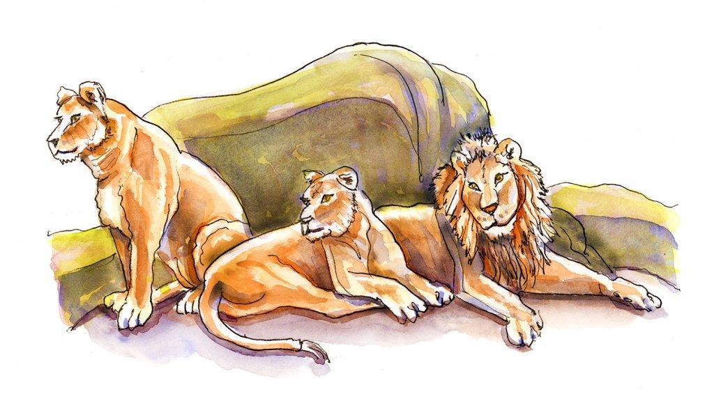 Day 24 - Lion Pride Watercolor