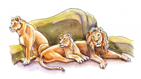 Day 24 - Lion Pride Watercolor