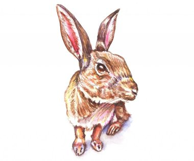 Day 3 - Rabbit Watercolor - Doodlewash