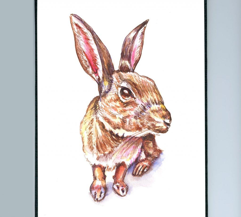 Day 3 - Rabbit Watercolor Sketchbook Detail - Doodlewash