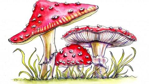 Day 4 - Fly Agaric Storybook Mushrooms Watercolor - Doodlewash
