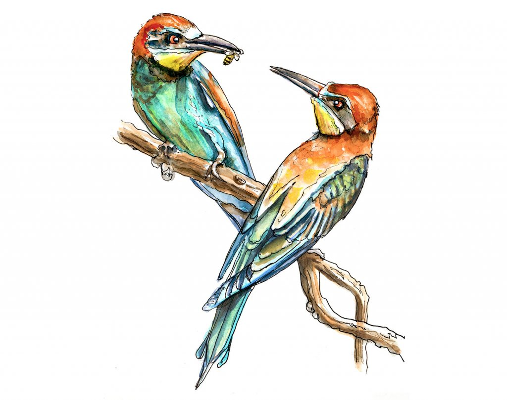 Day 8 - European Bee-Eater Bird Watercolor - Doodlewash