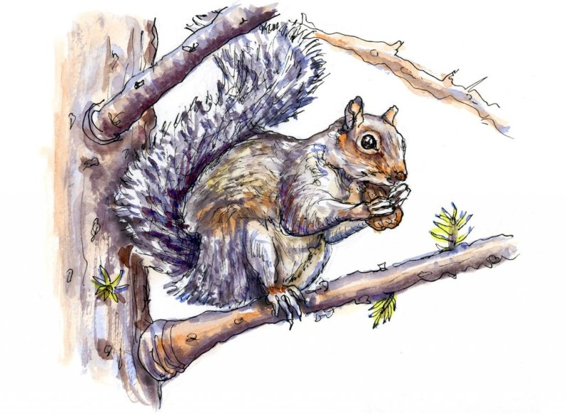Day 9 - Squirrel Eating Nut Watercolor - Doodlewash