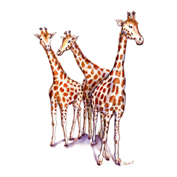 Three Giraffes Watercolor Print Detail