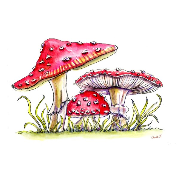 Storybook Mushrooms Detail