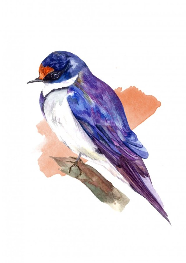 Watercolor Bird Blue by Fatima Aslam - Doodlewash