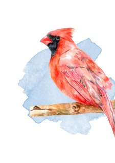 Watercolor Cardinal Bird by Fatima Aslam - Doodlewash