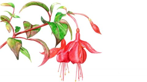 Watercolor Red Flowers by Fatima Aslam - Doodlewash