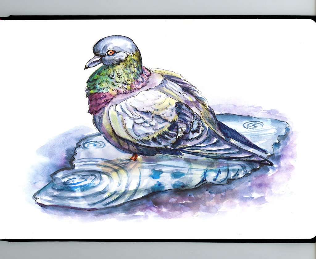 Pigeon In A Puddle Watercolor - Doodlewash