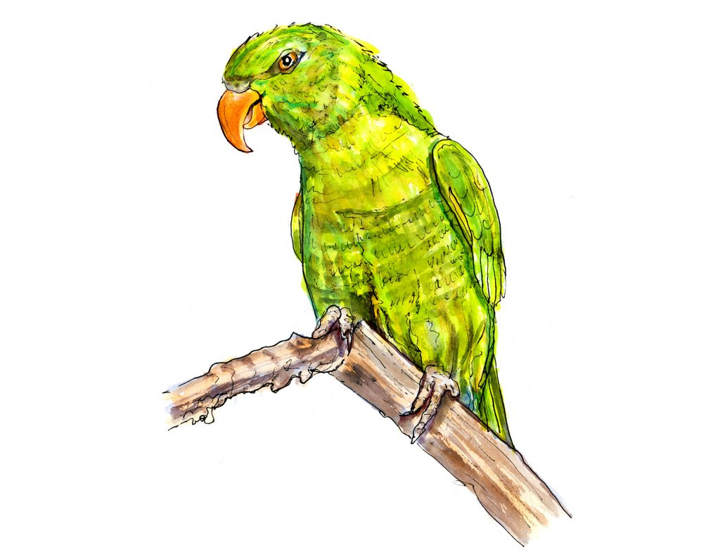 Day 17 - Parrot St. Patrick's Day Illustration - Doodlewash