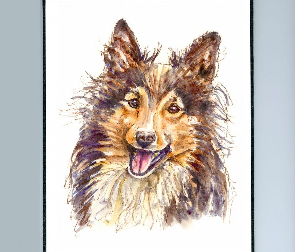 Day 27 - Sheltie Watercolor Illustration - Doodlewash