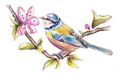 Day 30 - Cherry Blossoms Blue Tit Watercolor - Doodlewash