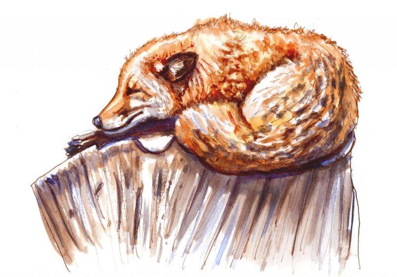 Day 9 - Sleeping Fox Illustration Watercolor - Doodlewash