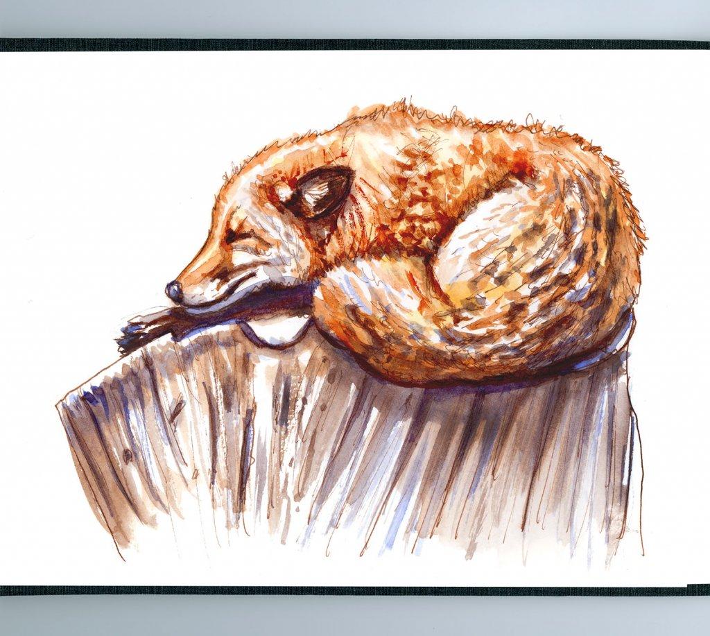 Sleeping Fox Illustration Watercolor - Doodlewash