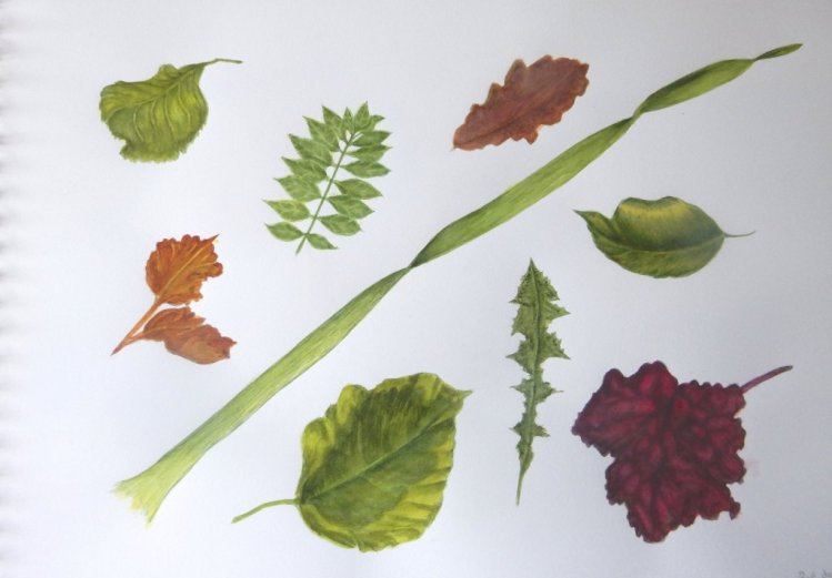 First page of practised leaves from a few years ago. i have reworked these with a lot of water and a