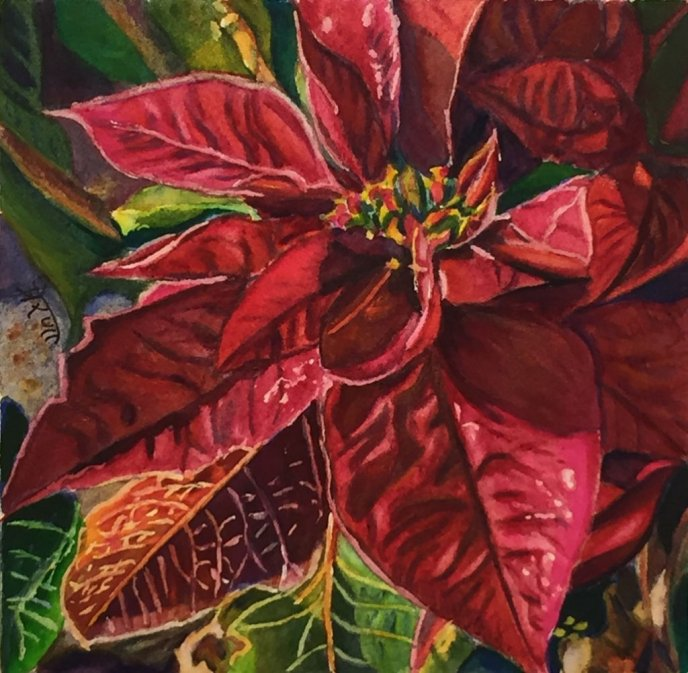 Poinsettia Watercolor Painting by Prerana Kulkarni - Doodlewash