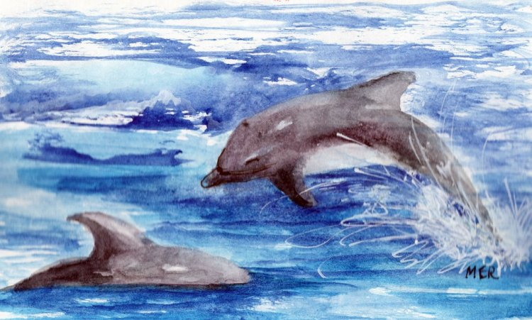 4/14/19 Dolphins I often see dolphin playing in the river near our home…they are so much fun t