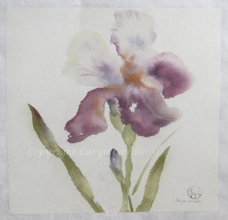 Iris II, Ink & Watercolor - C. Coville - Doodlewash