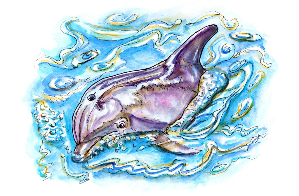 Day 14 - Dolphin Watercolor Illustration - Doodlewash