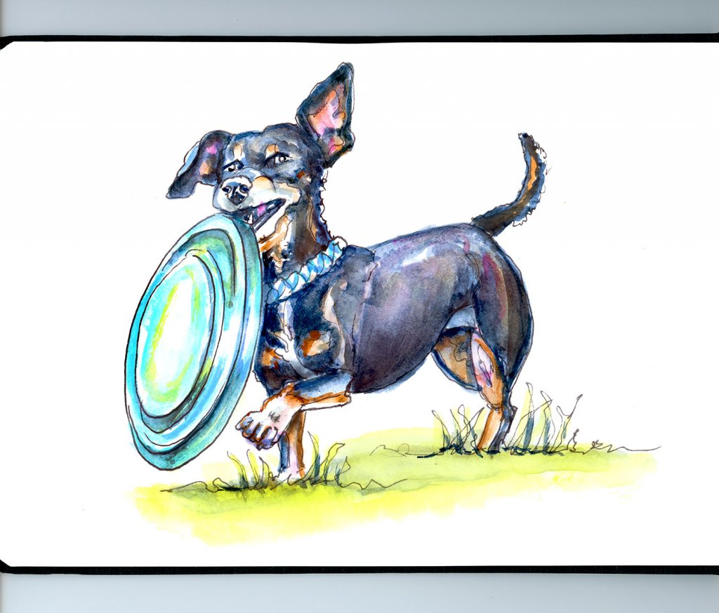 Dachshund Dog With Frisbee Illustration Watercolor