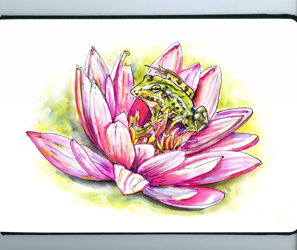 Day 27 - Frog Lotus Flower Illustration - Doodlewash