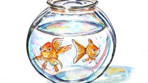 Day 5 - Two Goldfish Bowl Illustration - Doodlewash