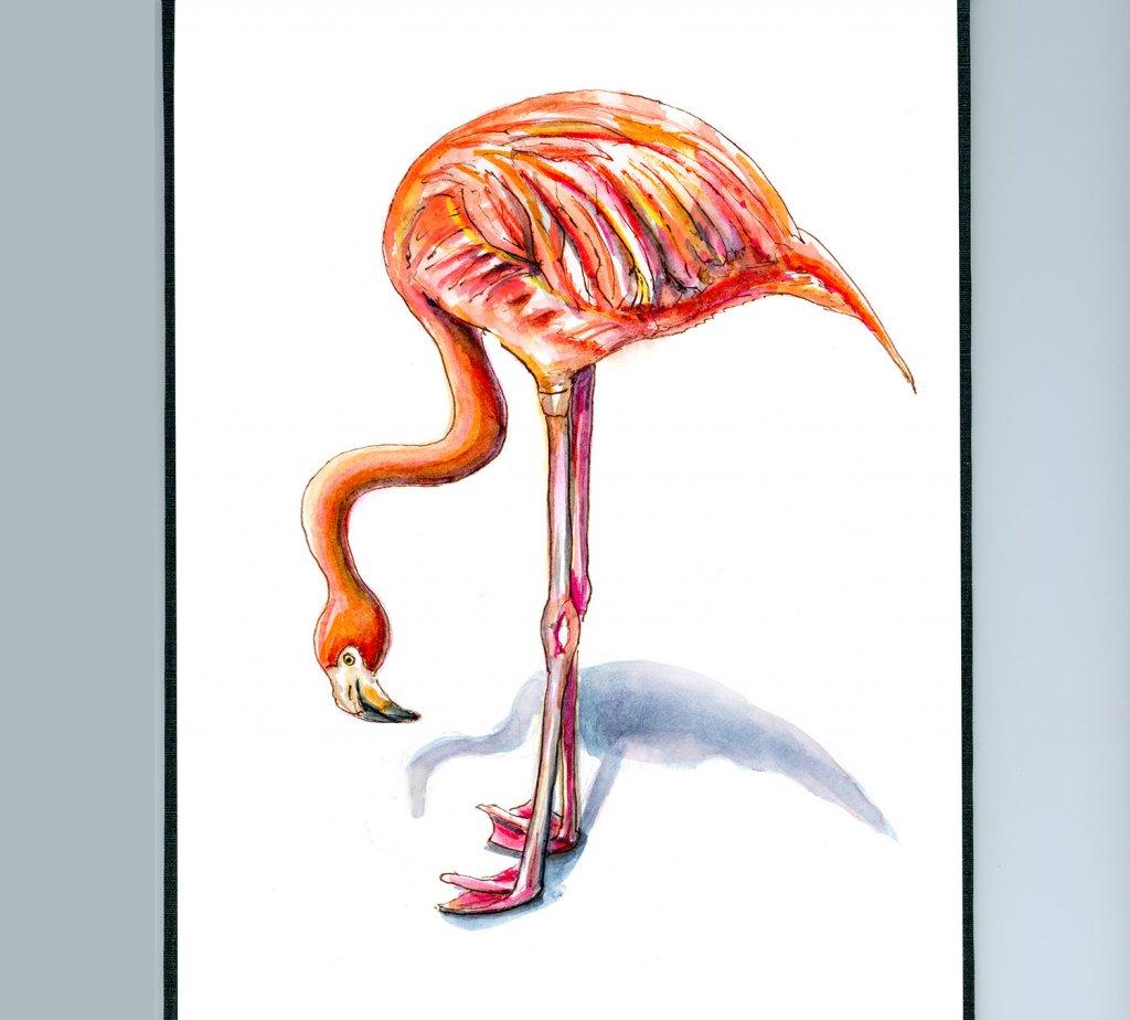 Day 8 - Flamingo Watercolor Illustration - Doodlewash