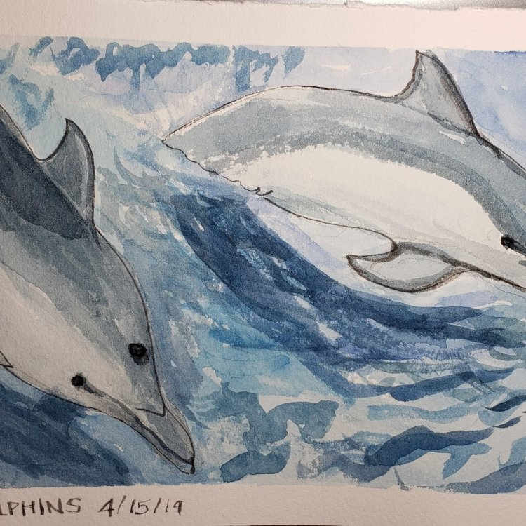 Dolphins for yesterday. More coming!? IMG_20190415_110335_291