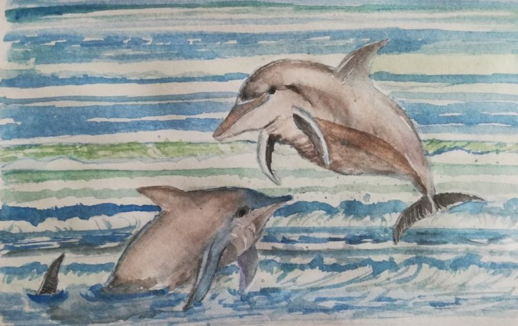 Dolphins IMG_20190417_111110