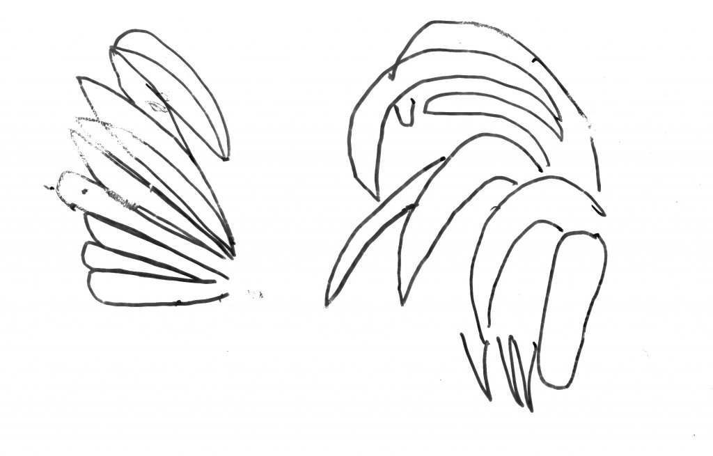 Bird Feather drawings simplified lines