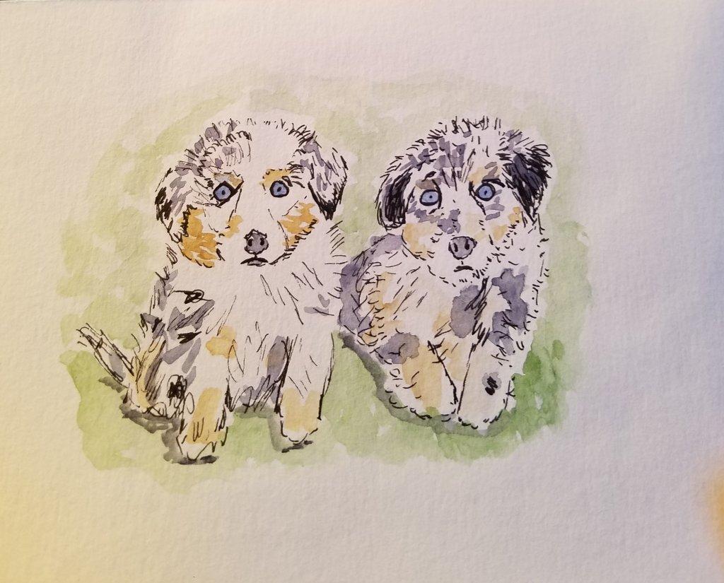 Puppies! 20190514_194222