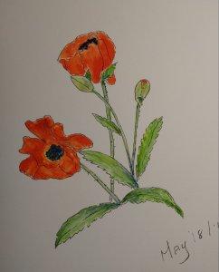 Study in Scarlett. Painted in my garden. 20190519_103540-1