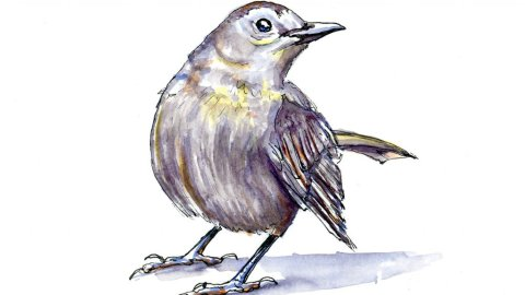 Grey Bird Watercolour Illustration - Doodlewash