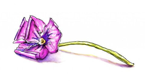 Purple Flower Watercolor Illustration - Doodlewash