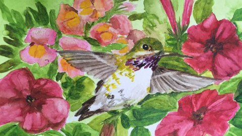 Hummingbird Watercolor Painting by Karalee Hammes - Doodlewash