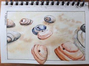 Day 1 Seashells fineliner in black and sepia, watercolor #doodleWashJune2019 #WorldWatercolorGroup01