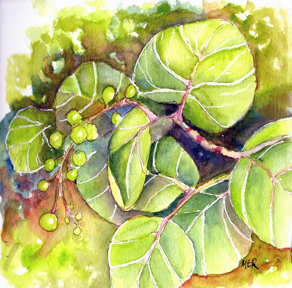 6/9/19 Green Sea Grapes 6.9.19 Green img043