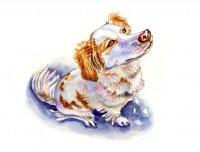 Dog Looking At Sky Watercolor Illustration