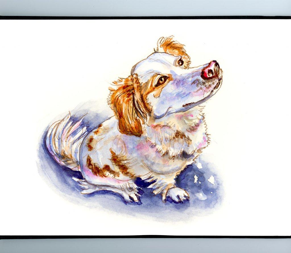 Dog Looking At Sky Watercolor Illustration Sketchbook Detail