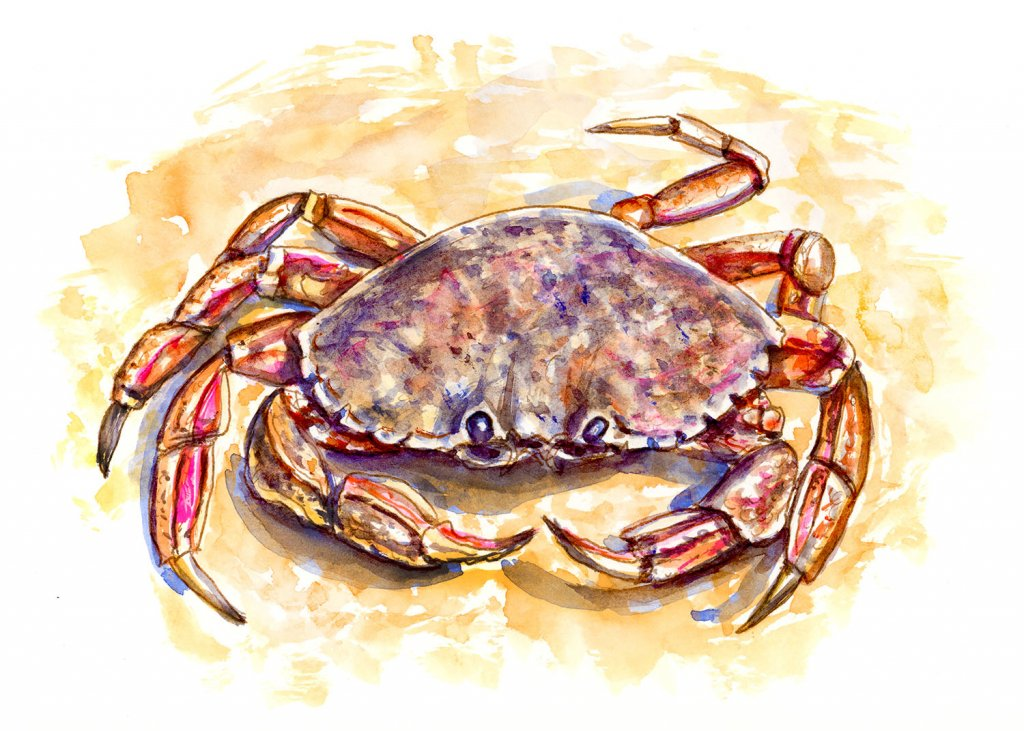 Crab On Beach Watercolor Illustration