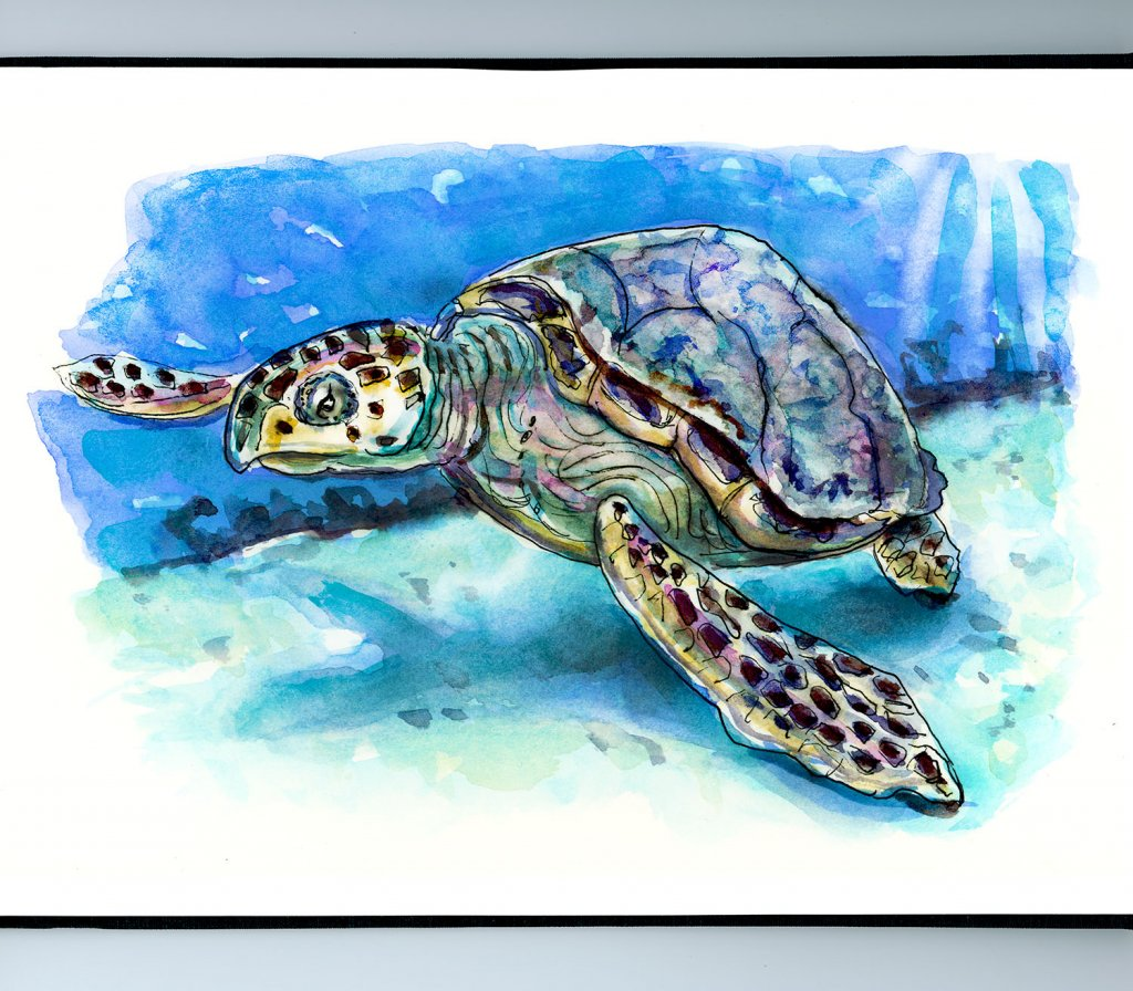Sea Turtle Watercolor Illustration Sketchbook Detail