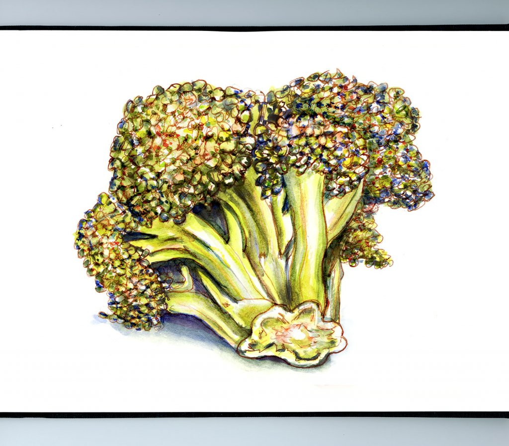 Broccoli Watercolor Illustration Sketchbook Detail