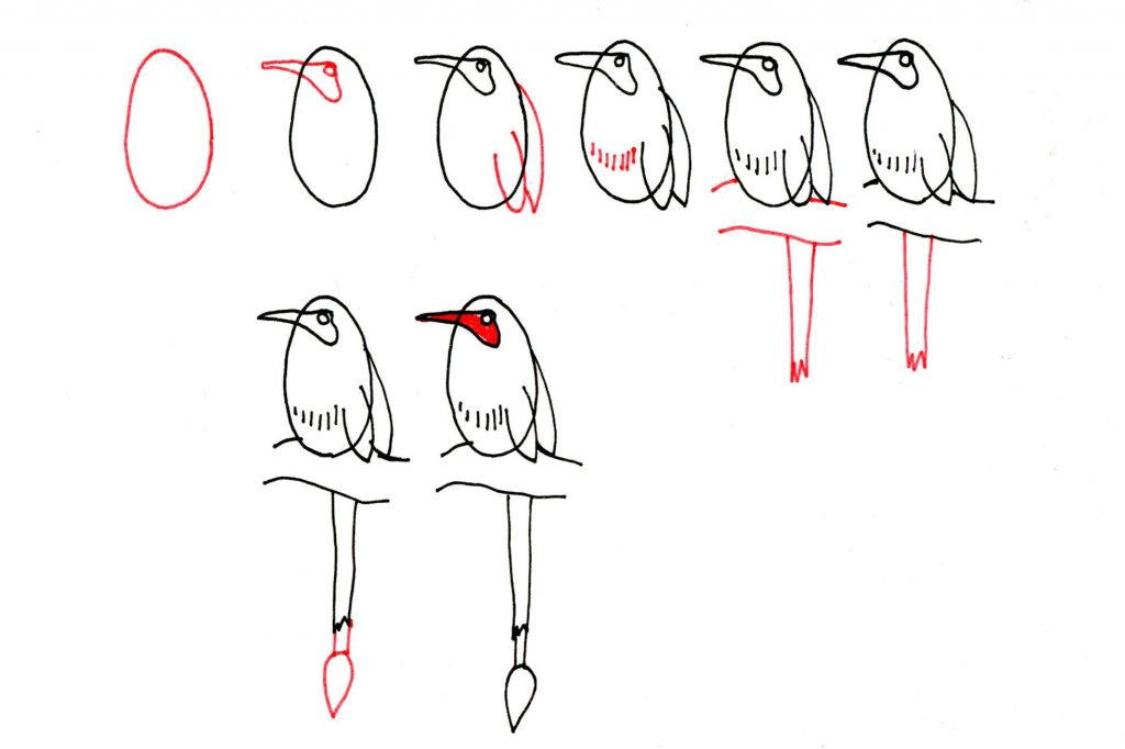 Steps of Drawing A Bird