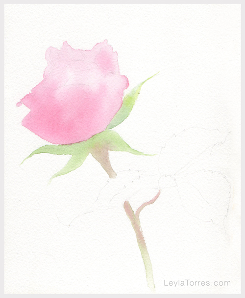 Rose in Watercolor Painting Step 1