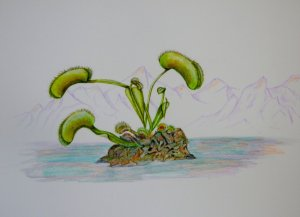 World Watercolor Group™ VENUS FLY TRAP painted last week whilst on course in Boscombe with Sh
