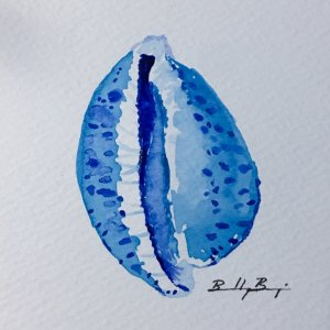 July 1 – Seashells – back into some watercolors for a month! BF7A2CE5-B8F8-4662-B4B1-6C9