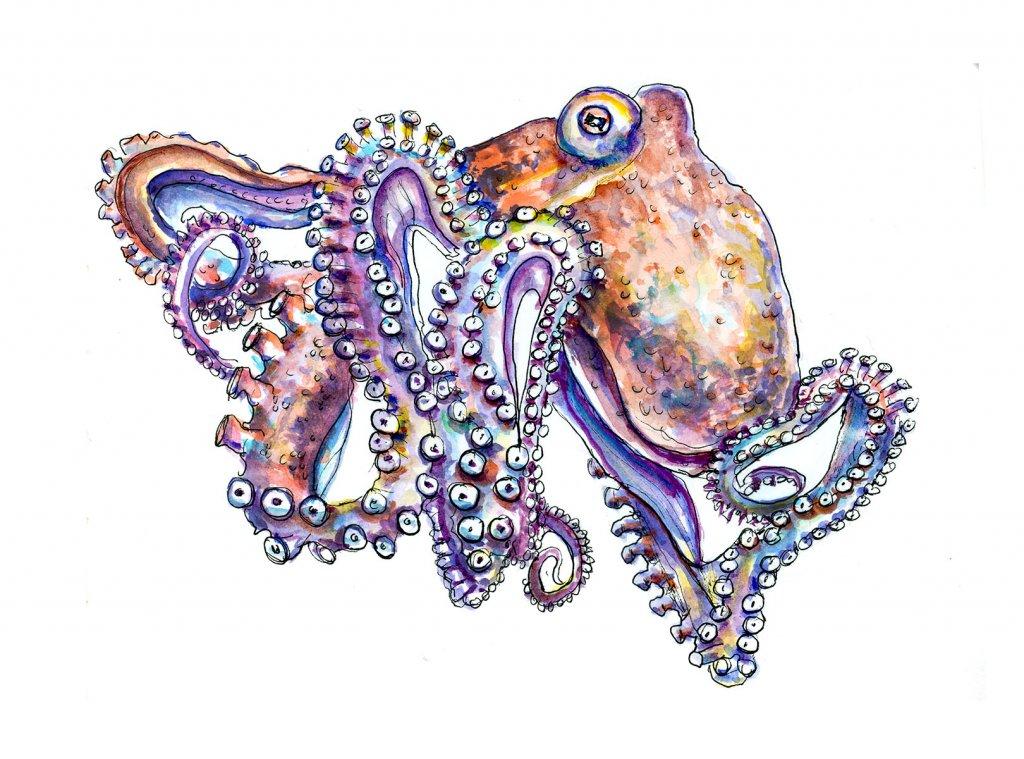 Octopus Watercolor Illustration
