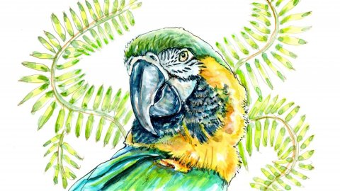 Macaw Watercolor Illustration